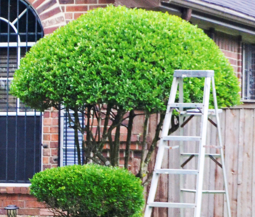 Hedge & Trimming